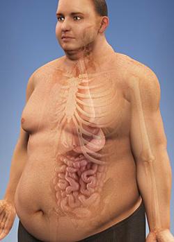 опасность жира на животе у женщин