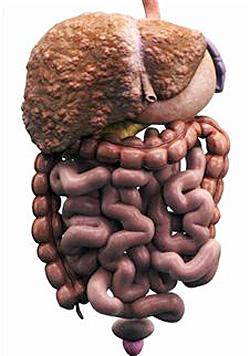 Гепатит с лечение химиотерапией