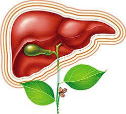 Методы лечения при циррозе печени